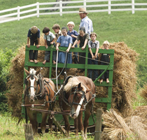 two horses pulling green wagon with children and one adult driving