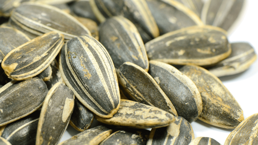 Sunflower seeds in shells.