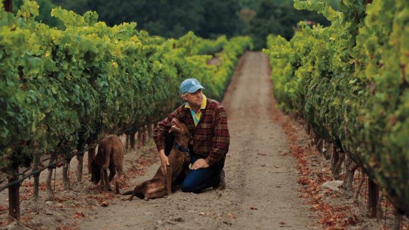 man and two dogs sitting in vineyard