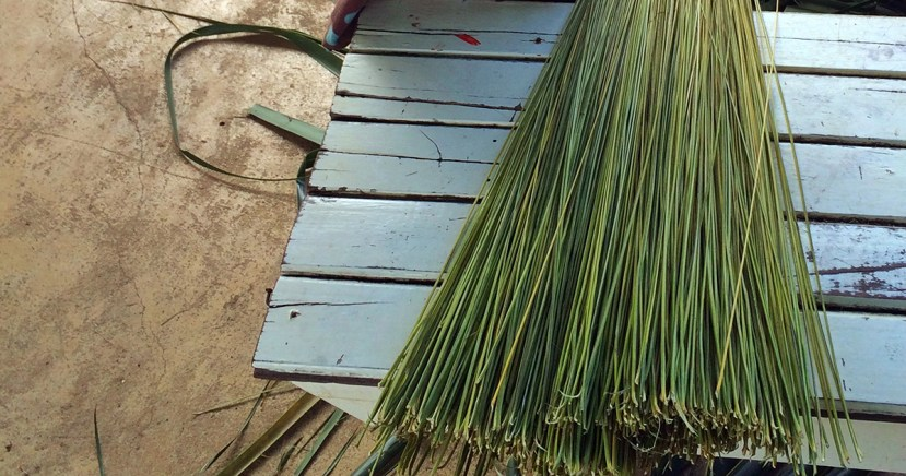 palm broom