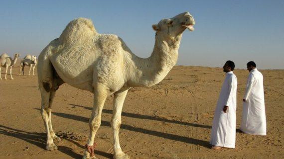 Komoditas Ekspor Impor Arab Saudi