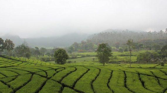 Potensi Komoditas Ekspor Jawa Barat