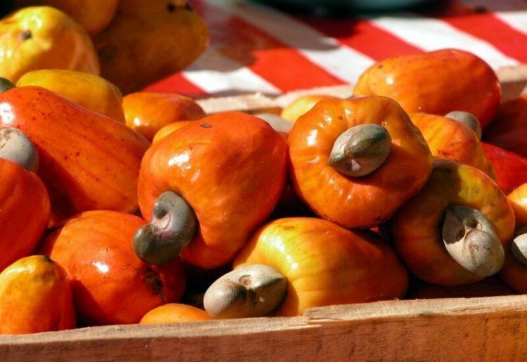 Produksi Kacang Mete di Dunia