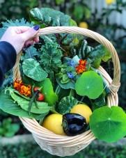 urban homesteading harvest
