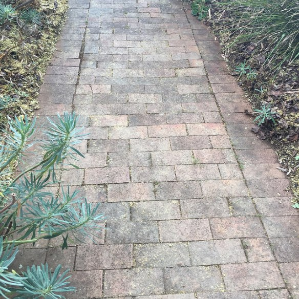 Straight garden path made with autumn-coloured pavers