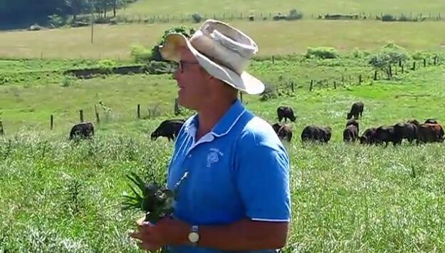 Grass farming video