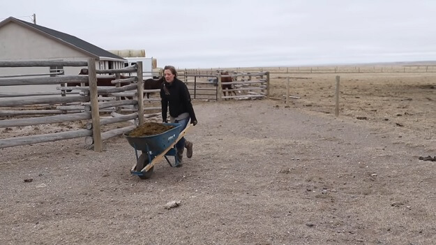 4 Questions to Ask Before Starting a Homestead