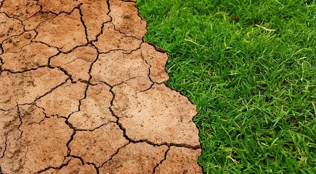 Sustainable solutions to reverse desertification