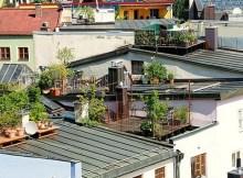 Starting an urban rooftop garden