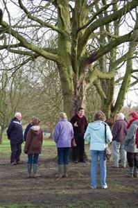 tree-warden-4-web-page_tcm15-7550