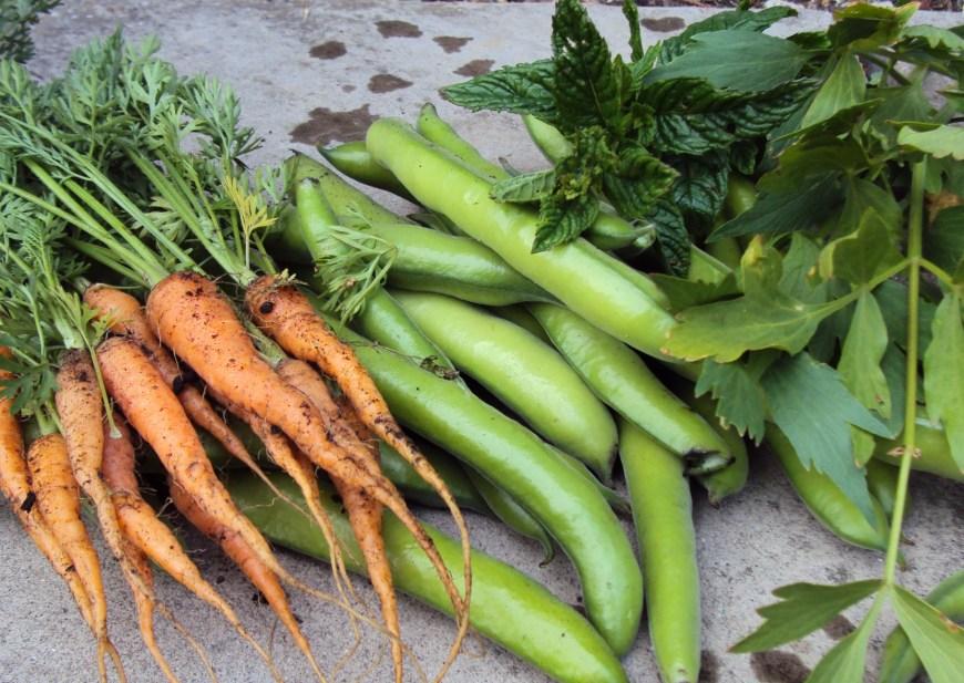 beansand carrots