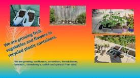 Lockdown competition - Emma age 11 lockdown presentation plants