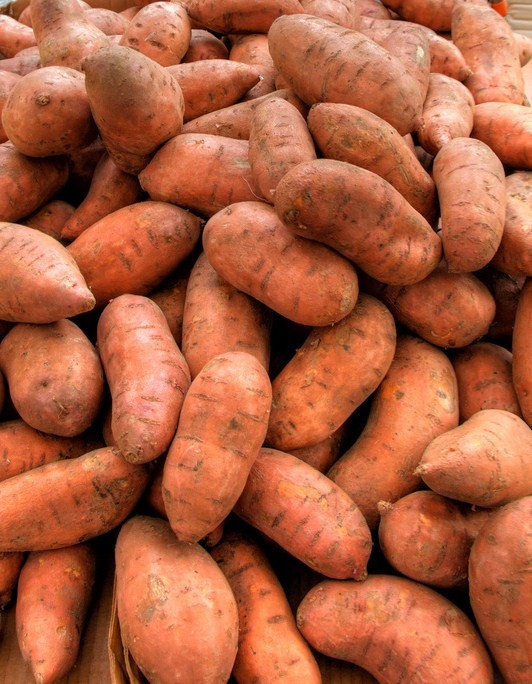 how to grow sweet potatoes in a cage