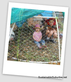 kids and chickens seen through chicken wire, inside a small chicken dome