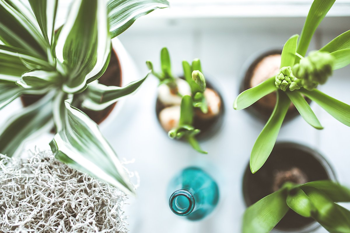 five steps to live more sustainably