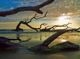 Jekyll Island Driftwood blog.artisticpix.com