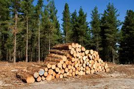 Timber? earthtimes.org
