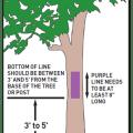 Purple Paint Diagram