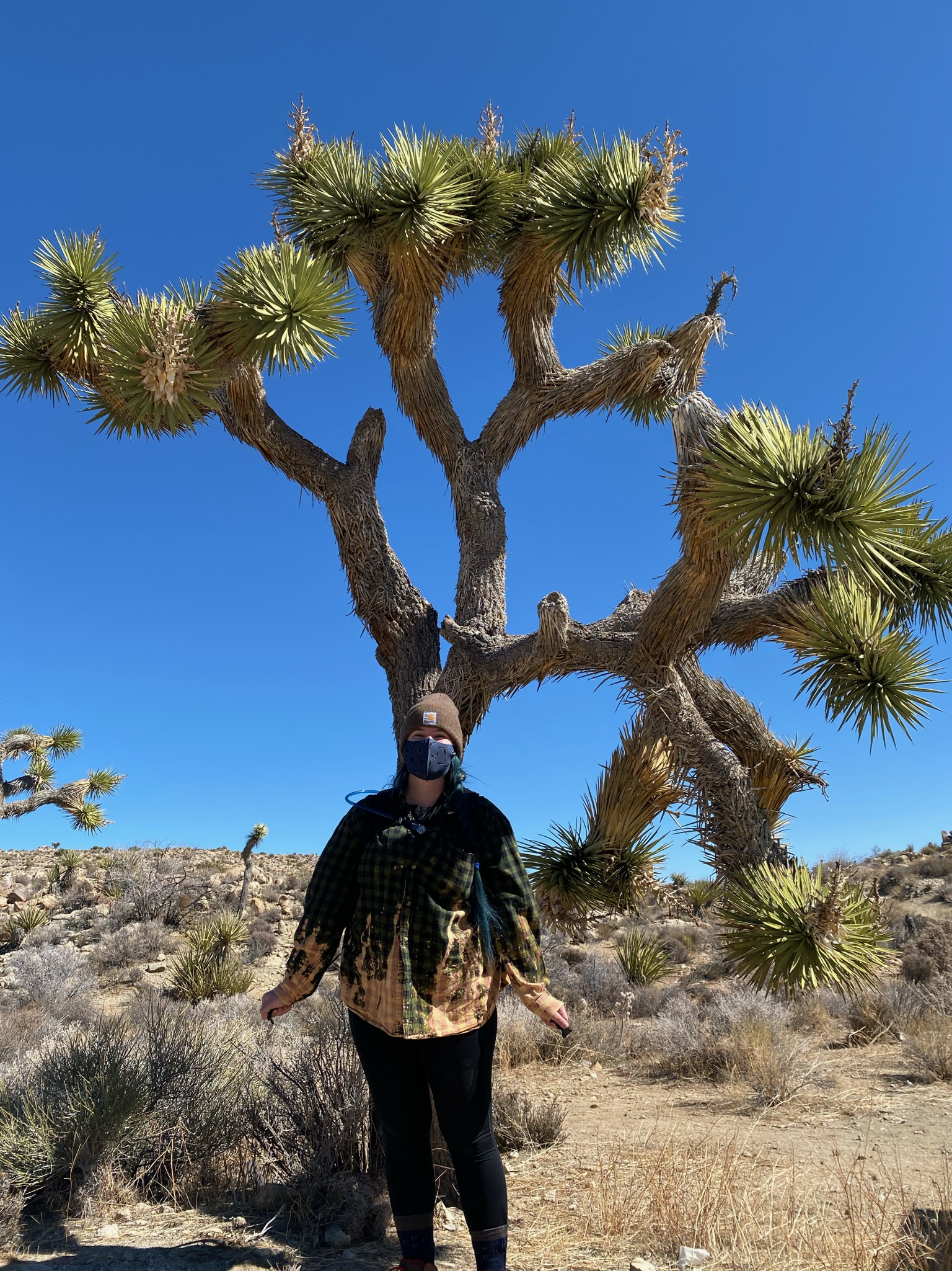 Woman earring a face mask in front of a Joshua Tree at a trail head for Queen's Mine trail