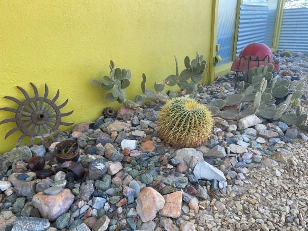Cactus, desert landscaping, oasis