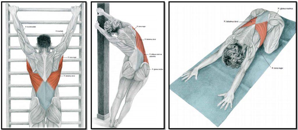 Растяжка спины и позвоночника в домашних условиях. Растяжка позвоночника: показания, эффективность, лучшие упражнения. Лежа в воде