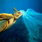 turtle and bag