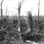 WWI devastation of trees