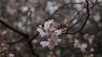 Shinjuku Gyoen National Garden by Erin Grace, CC BY-SA 2.0