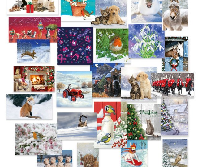 Christmas Cards Greetings Cards Charity Gifts Cards Rspca Shop