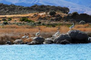 lake-lahontan silver springs trip advisor