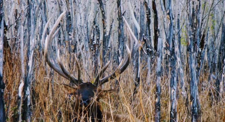 Elk plan adjustments