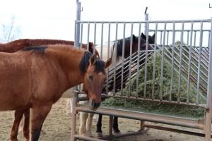 suu equine