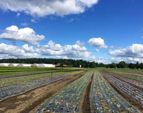 biohajoava kalvo suojaa rikkaruohoilta