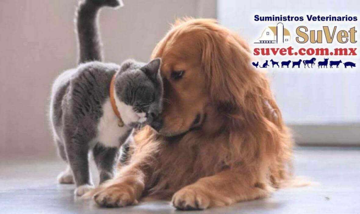 Accesorios para mascotas SuVet