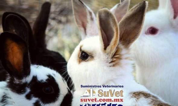 Producción sustentable de conejo