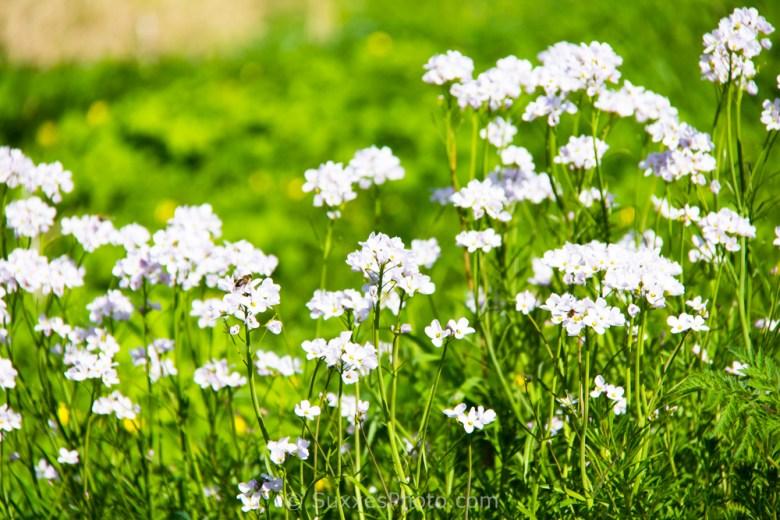 white flowers river severn