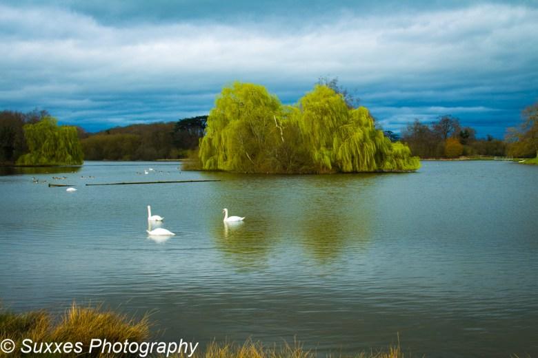 Swans pirton pool