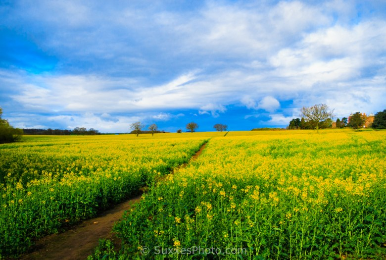 rapeseed westwood park Droitwich Spa