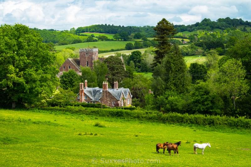 grazing horses Abbey dore