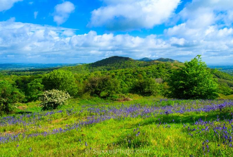 bluebells malvern hills beacons