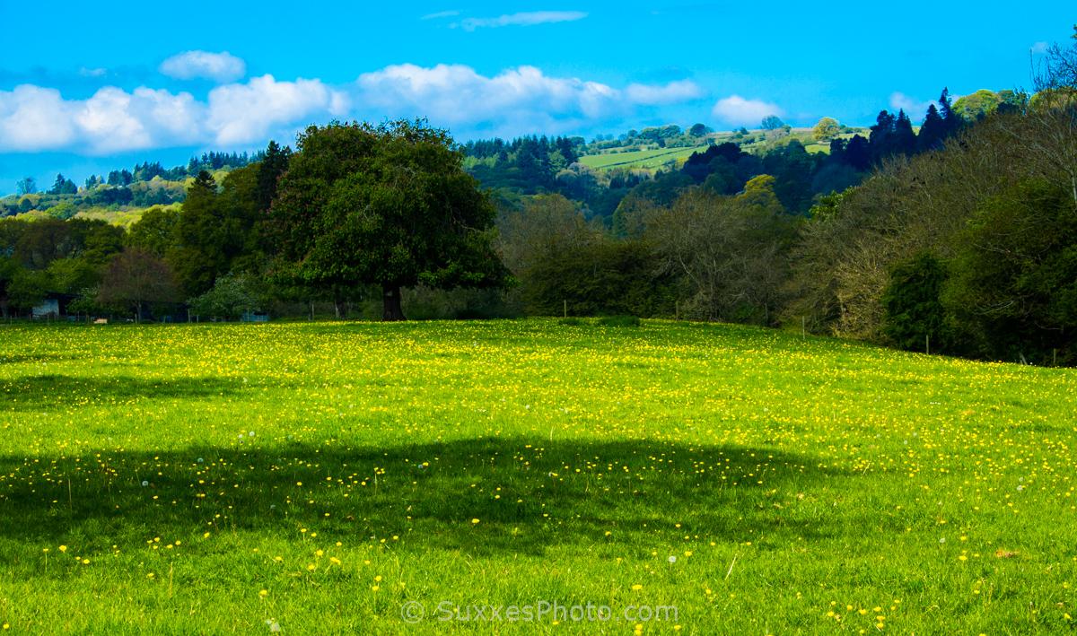 buttercup meadow kington