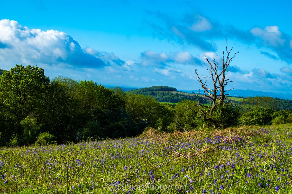 dead tree south malvern hills