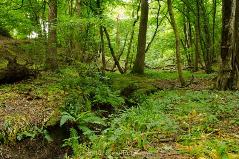 woodland sussex border path