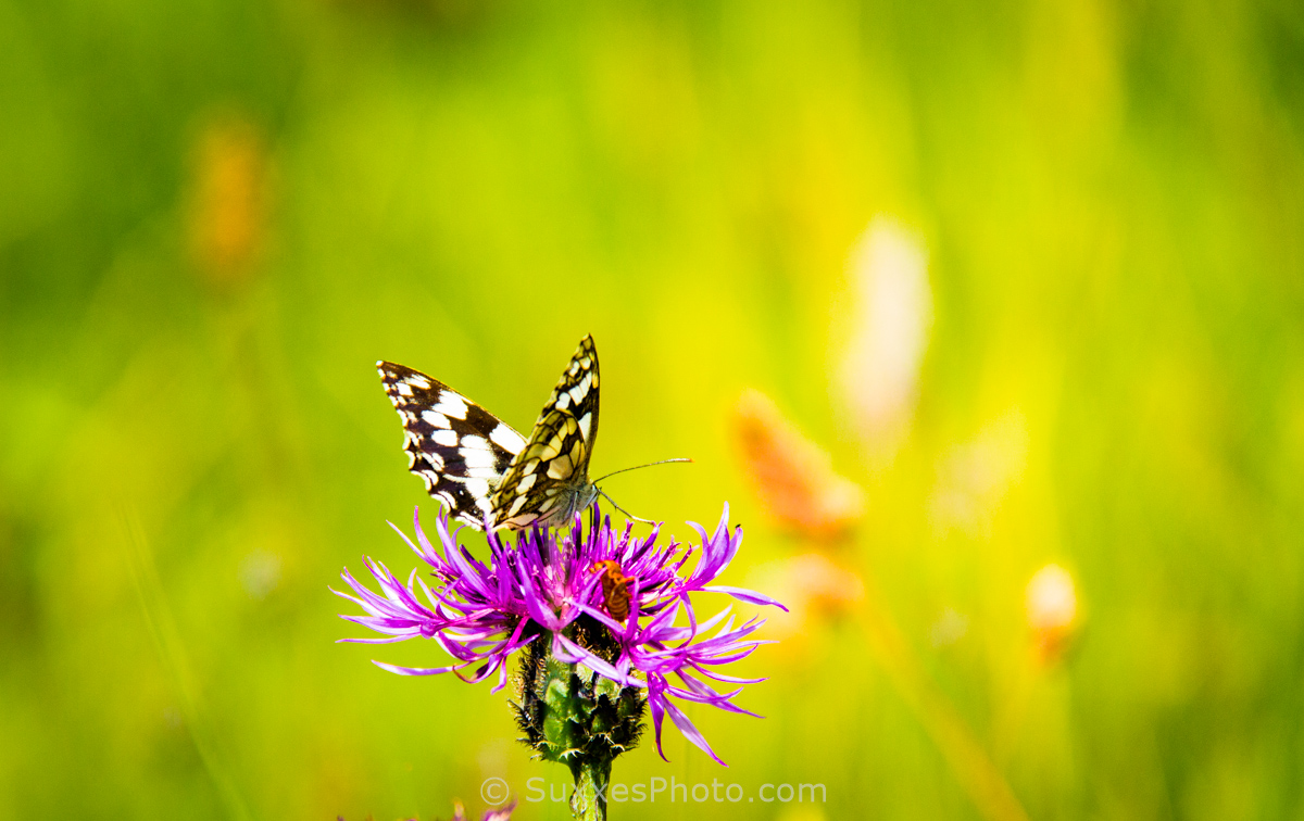 Butterflies on the cliff