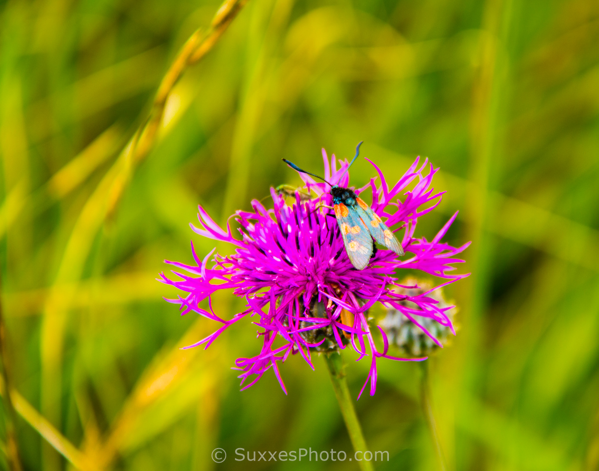 dorset cliff bugs