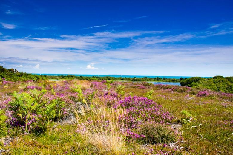 studland heath dorset