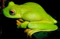 344542-grenouille-avec-crocs-serpent-aveugle