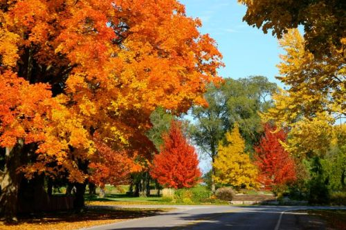 niagara-on-lake in Fall