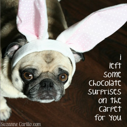pug bunny chocolate surprises