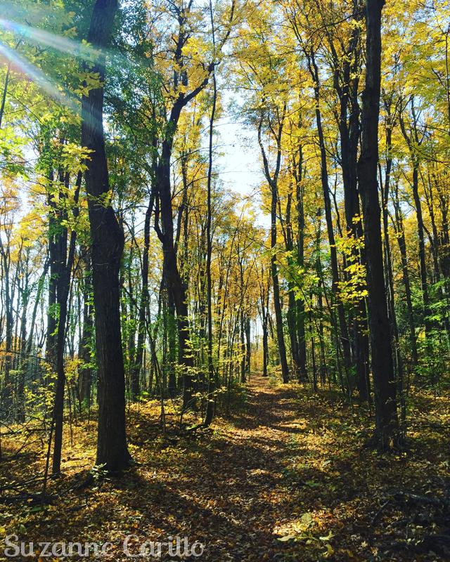 beautiful ontario fall suzanne carillo